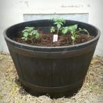 Tiny tomats
