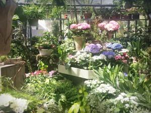 Not so secret garden